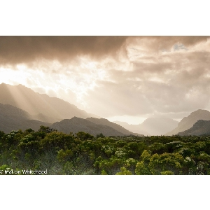 Gallery-Fynbos-Cloudy