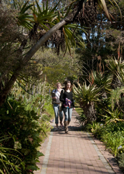 Stellenbosch-Students-on-Aloe-Path